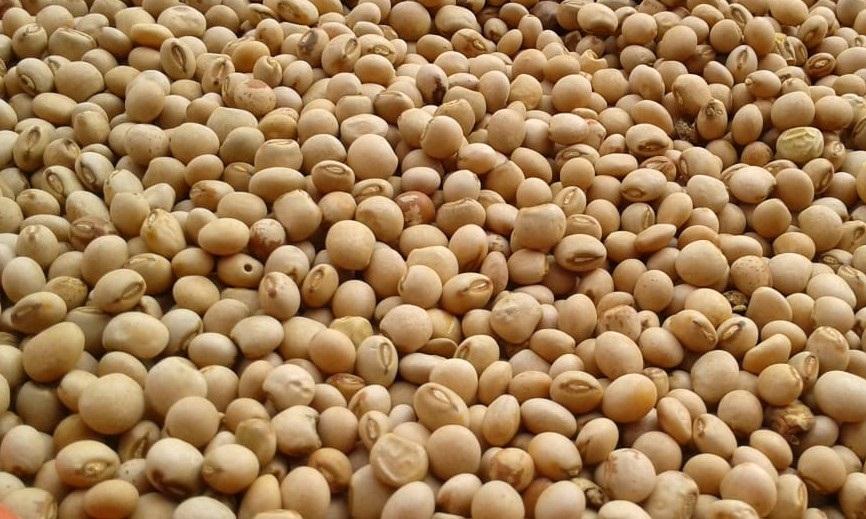 Peas   Betta Grains